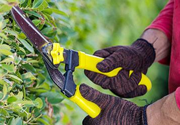 Abattage d'arbres à Villefranche de Rouergue